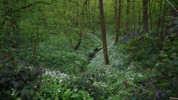 spring_wood_2015
